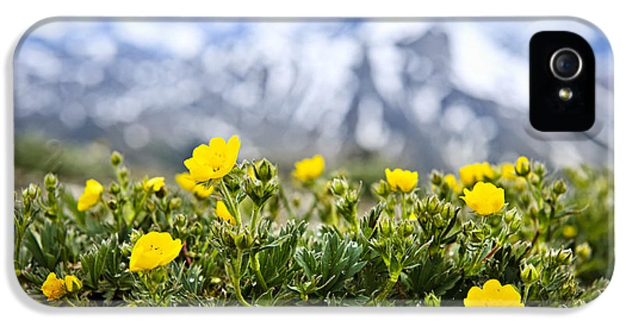 Alpine IPhone 5 Case featuring the photograph Alpine Meadow In Jasper National Park by Elena Elisseeva