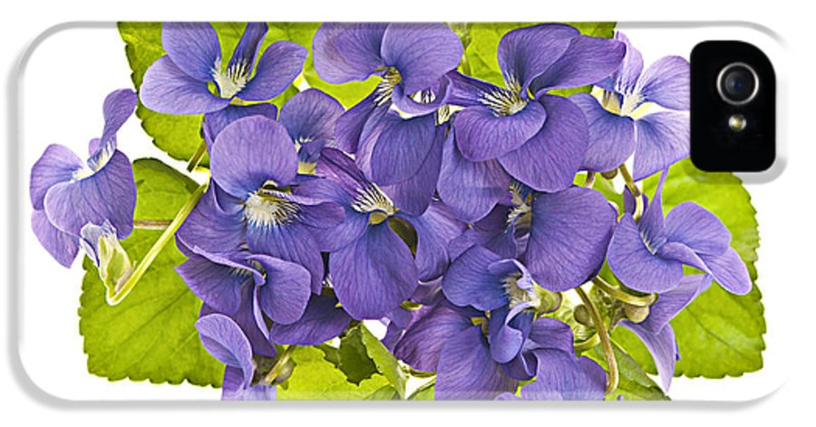 Violets IPhone 5 Case featuring the photograph Bouquet Of Violets by Elena Elisseeva