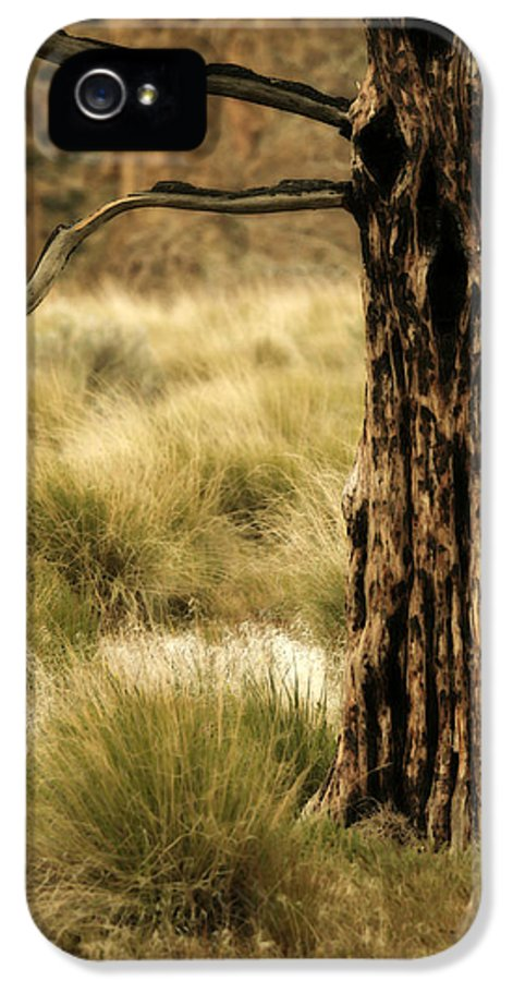 Tree Art IPhone 5 Case featuring the photograph Burnt Juniper by Bonnie Bruno