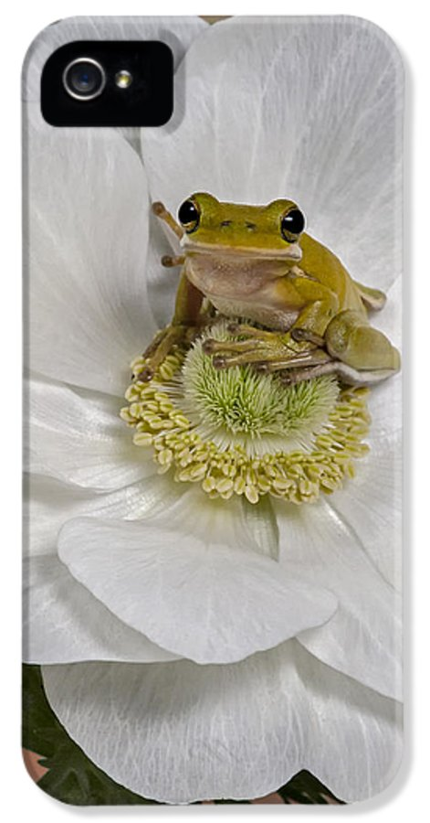 Green Tree Frog IPhone 5 Case featuring the photograph Kermit by Susan Candelario