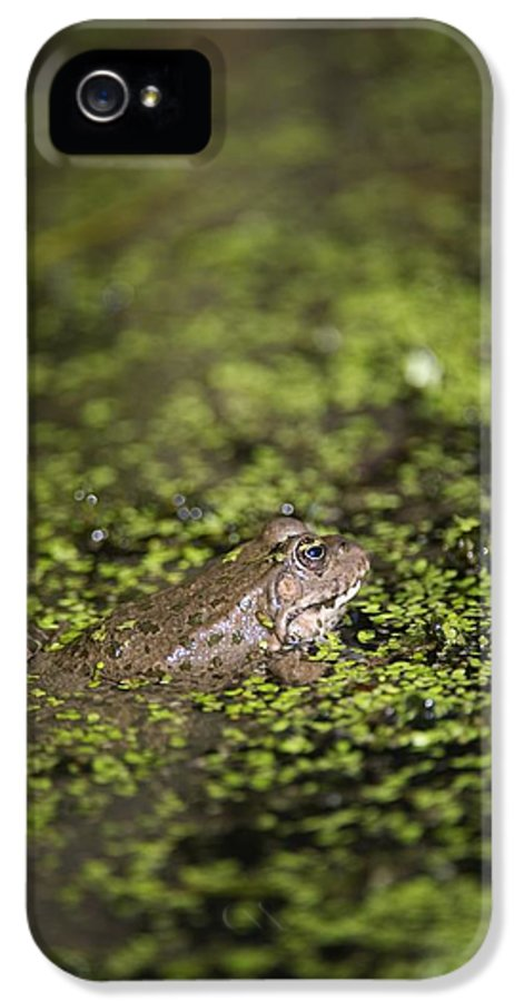 Algae IPhone 5 Case featuring the photograph Marsh Frog by Louise Murray