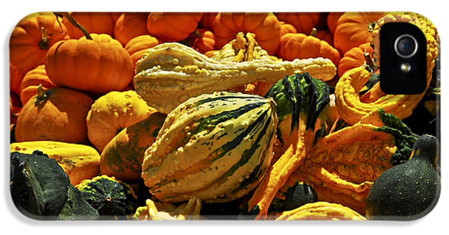 Pumpkin IPhone 5 Case featuring the photograph Pumpkins And Gourds by Elena Elisseeva