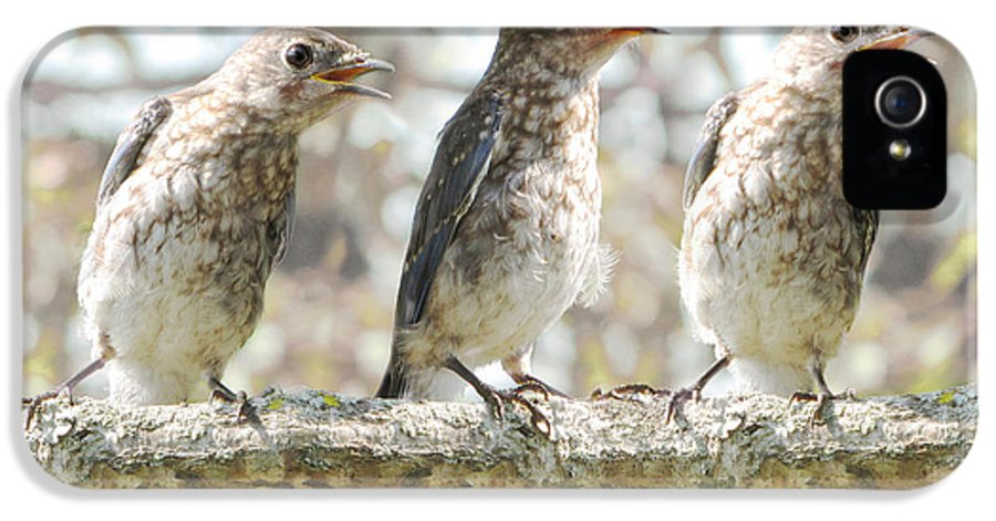 Singing Birds IPhone 5 Case featuring the photograph Sing Sing Sing by Amy Tyler