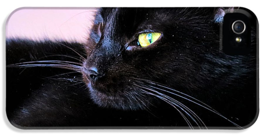 Cat IPhone 5 Case featuring the photograph Green Eyes by Art Dingo