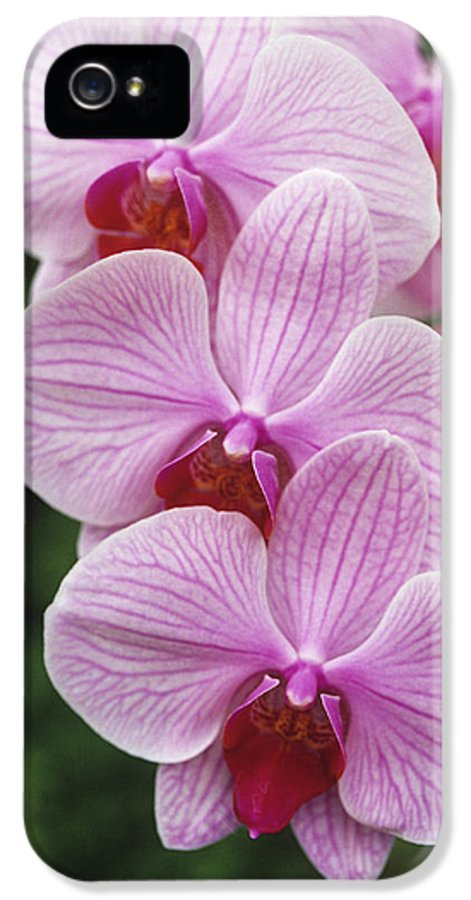 Acrab X Mad Hatter IPhone 5 Case featuring the photograph Orchid Flowers by Duncan Smith