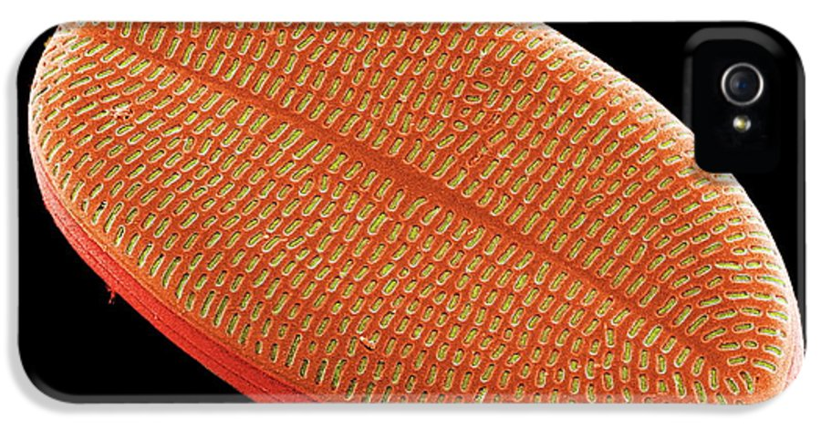 Calcareous Phytoplankton IPhone 5 / 5s Case featuring the photograph Diatom, Sem by Steve Gschmeissner