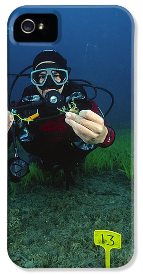 Alga IPhone 5 Case featuring the photograph Invasive Seaweed Control by Alexis Rosenfeld
