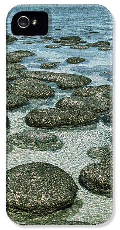 Hamelin Pool IPhone 5 Case featuring the photograph Stromatolites by Georgette Douwma