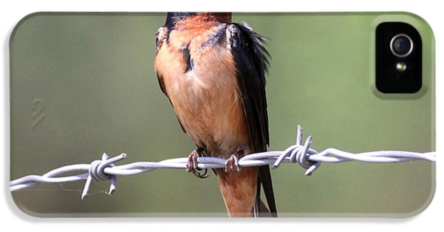 Barn Swallow IPhone 5 Case featuring the photograph A Little Ruffled by Travis Truelove