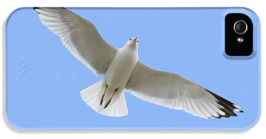Horizontal IPhone 5 Case featuring the photograph A Soaring Dove by Don Hammond
