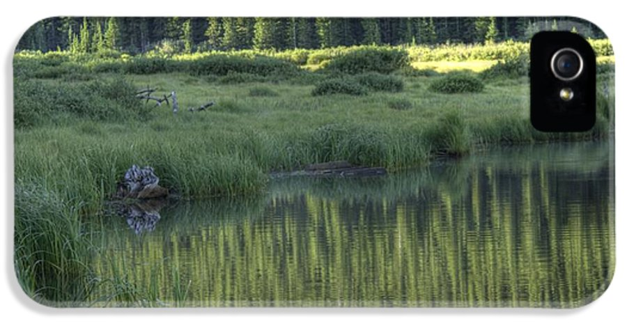 Willow Lake IPhone 5 Case featuring the photograph A Study In Green by David Bearden