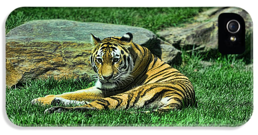 The Tiger's Gaze IPhone 5 Case featuring the photograph A Tiger's Gaze by Paul Ward
