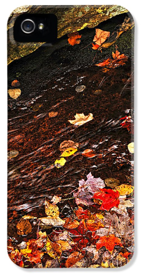 Creek IPhone 5 Case featuring the photograph Autumn Leaves In River by Elena Elisseeva