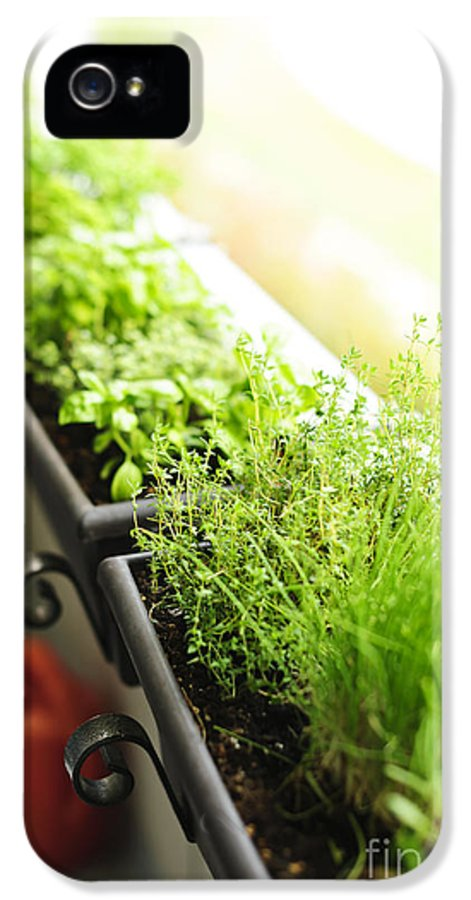 Herbs IPhone 5 Case featuring the photograph Balcony Herb Garden by Elena Elisseeva