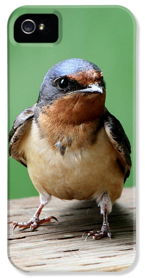 Bird IPhone 5 Case featuring the photograph Barn Swallow by Angie Vogel