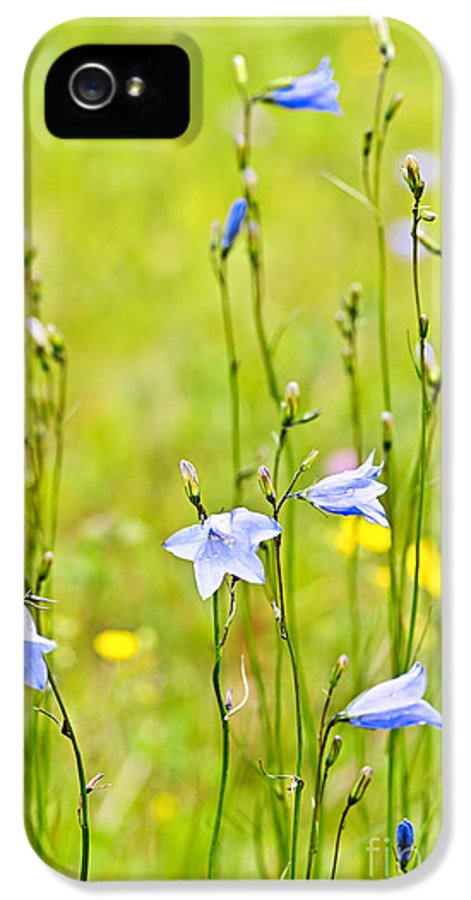 Flowers IPhone 5 Case featuring the photograph Blue Harebells Wildflowers by Elena Elisseeva