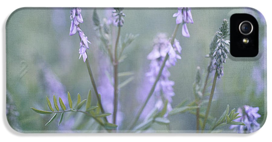 American Blue Vervain IPhone 5 Case featuring the photograph Blue Vervain by Priska Wettstein