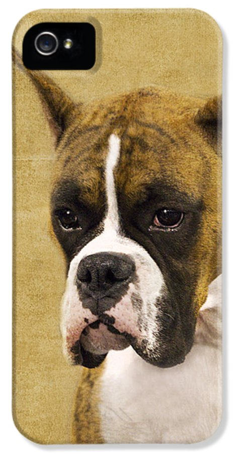 Boxer IPhone 5 Case featuring the photograph Boxer by Rebecca Cozart
