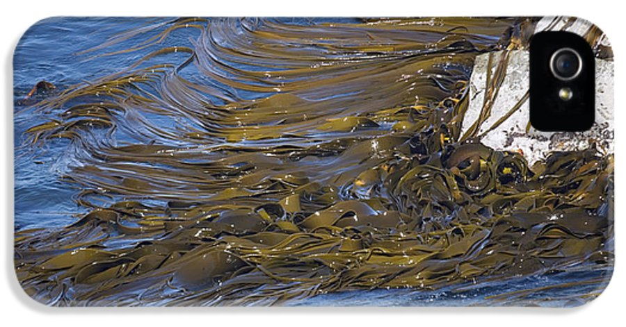 Durvillea Antarctica IPhone 5 Case featuring the photograph Bull Kelp Bed by Bob Gibbons