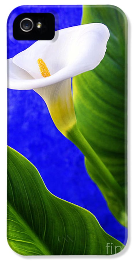 Anniversary IPhone 5 Case featuring the photograph Calla Over Blue by Carlos Caetano