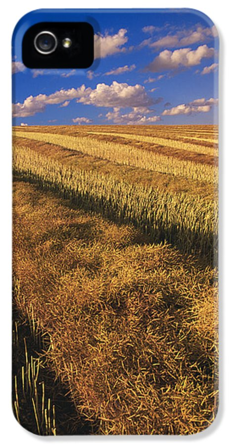 Canola Field IPhone 5 / 5s Case featuring the photograph Canola Field, Tiger Hills, Manitoba by Dave Reede