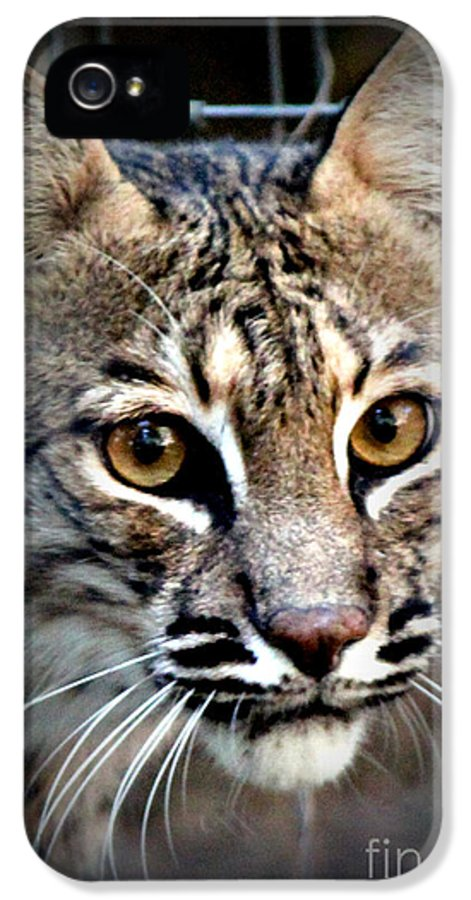Wild Animals IPhone 5 Case featuring the photograph Cat Fever by Kathy White