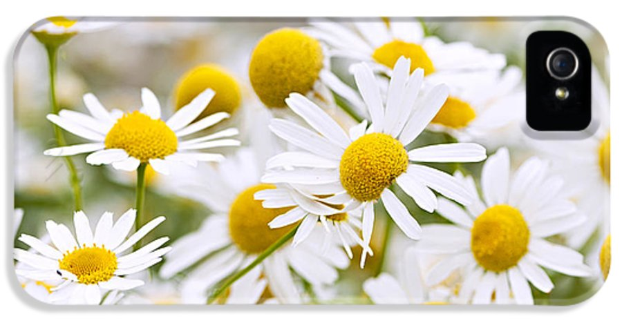 Chamomile IPhone 5 Case featuring the photograph Chamomile Flowers by Elena Elisseeva