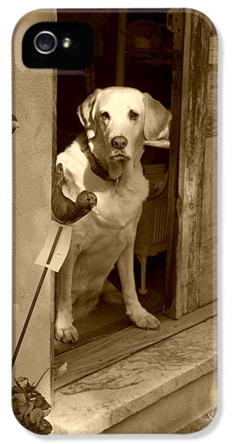 Dog IPhone 5 Case featuring the photograph Charleston Shop Dog In Sepia by Suzanne Gaff
