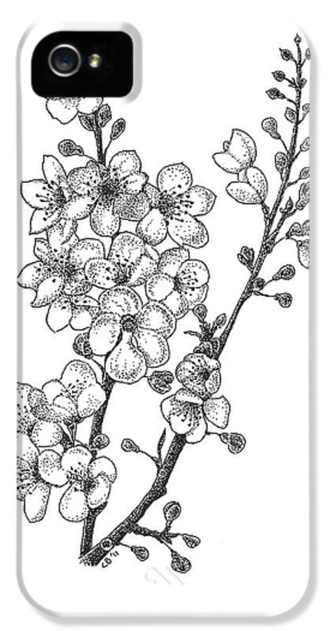 Flowers IPhone 5 Case featuring the drawing Cherry Blossems by Christy Beckwith