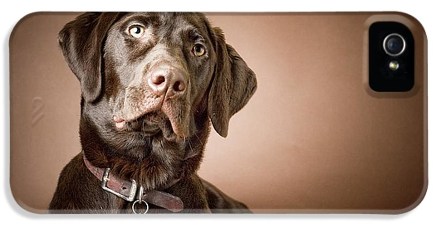 1 Animal Only IPhone 5 Case featuring the photograph Chocolate Labrador Retriever Portrait by David DuChemin