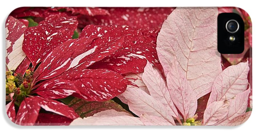 Christmas IPhone 5 Case featuring the photograph Christmas Poinsettias by Michael Peychich