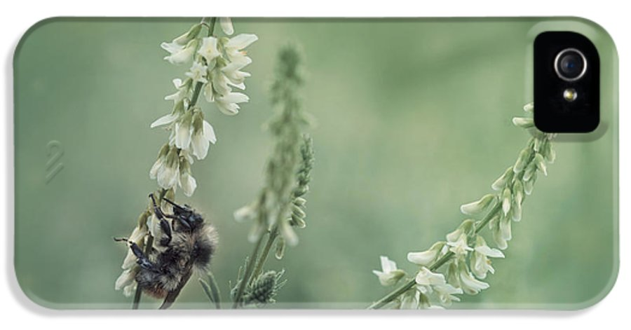 Sweet Clover IPhone 5 Case featuring the photograph Collecting The Summer by Priska Wettstein