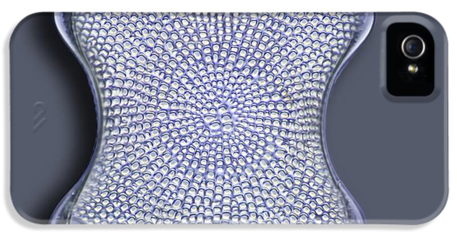Alga IPhone 5 Case featuring the photograph Diatom, Light Micrograph by Frank Fox