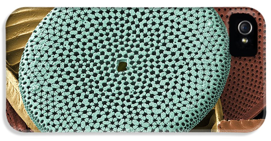 Calcareous Phytoplankton IPhone 5 Case featuring the photograph Diatoms, Sem by Steve Gschmeissner