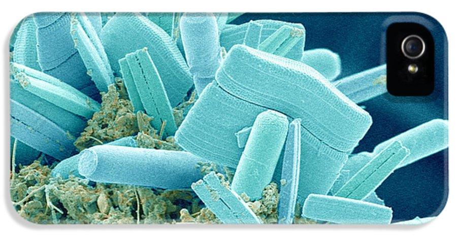 Alga IPhone 5 Case featuring the photograph Diatoms, Sem by Susumu Nishinaga