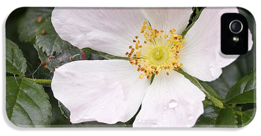 Dog Rose IPhone 5 Case featuring the photograph Dog Rose (rosa Canina) by Adrian Bicker