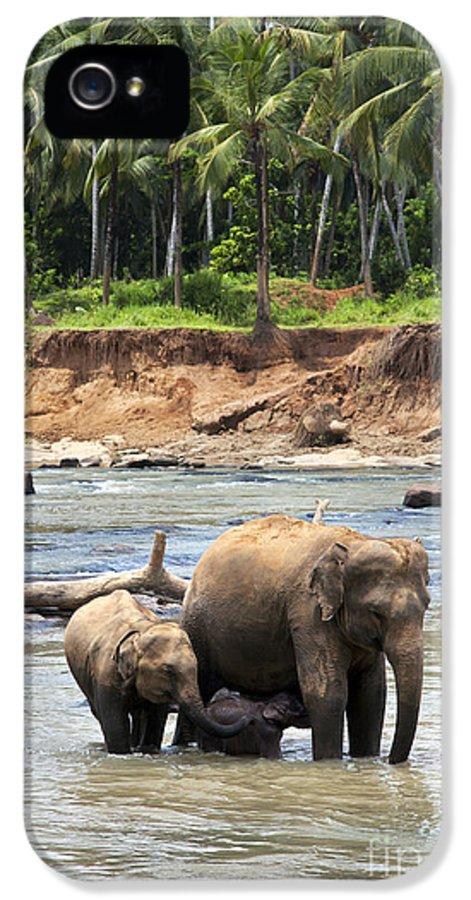 Animal IPhone 5 Case featuring the photograph Elephant Family by Jane Rix