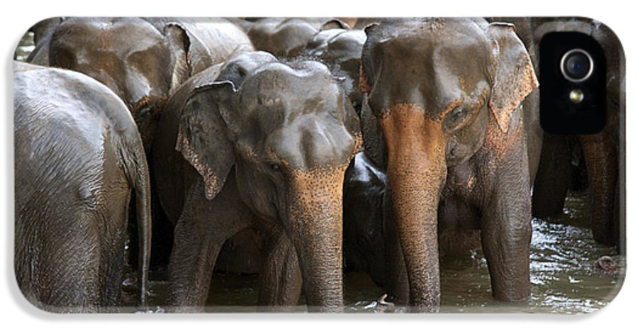 Animal IPhone 5 Case featuring the photograph Elephant Herd In River by Jane Rix