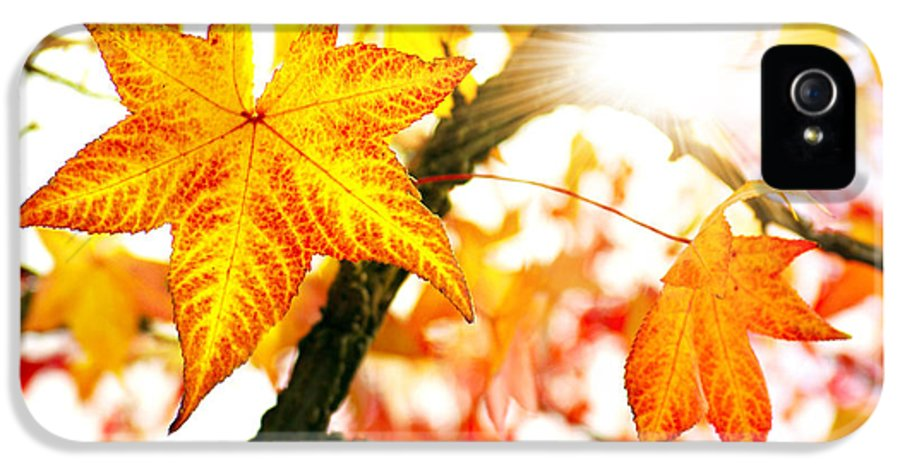Autumn IPhone 5 Case featuring the photograph Fall Colors by Carlos Caetano