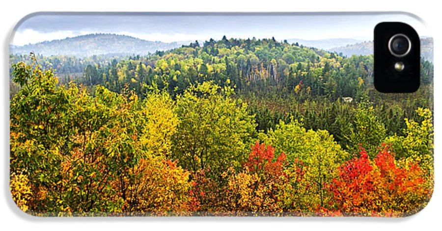 Autumn IPhone 5 Case featuring the photograph Fall Forest by Elena Elisseeva