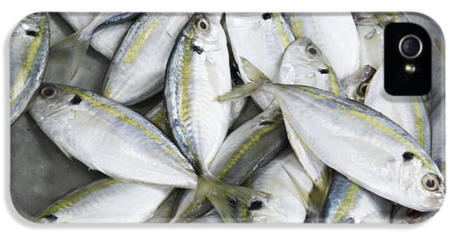 Business IPhone 5 Case featuring the photograph Fish For Sale In A Market by Skip Nall