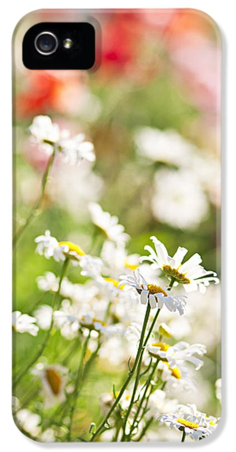 Meadow IPhone 5 Case featuring the photograph Flower Meadow by Elena Elisseeva