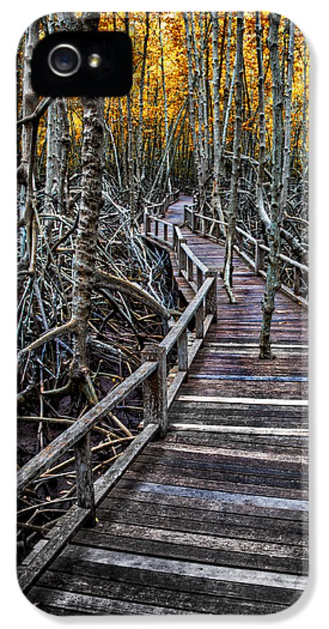 Area IPhone 5 Case featuring the photograph Footpath In Mangrove Forest by Adrian Evans