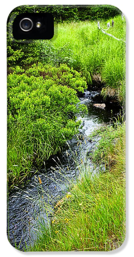 Creek IPhone 5 Case featuring the photograph Forest Creek In Newfoundland by Elena Elisseeva