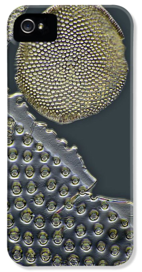 Alga IPhone 5 Case featuring the photograph Fossil Diatoms, Light Micrograph by Frank Fox