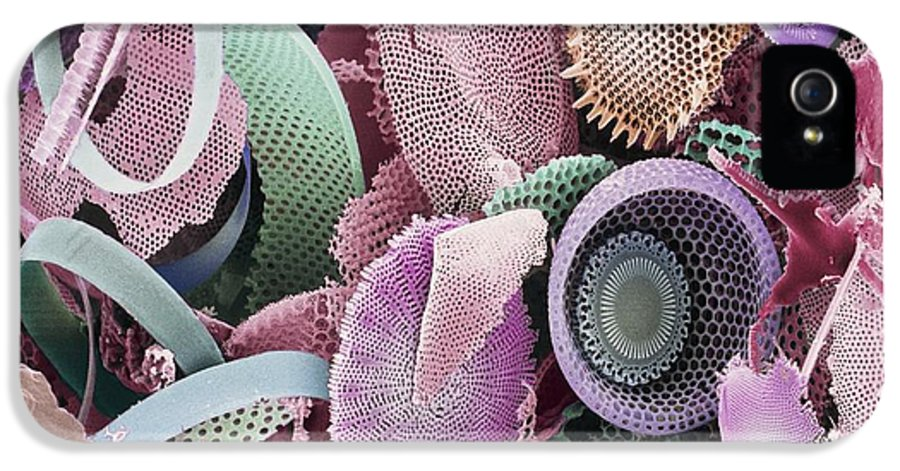 Diatom IPhone 5 Case featuring the photograph Fossilised Diatoms, Sem by Steve Gschmeissner