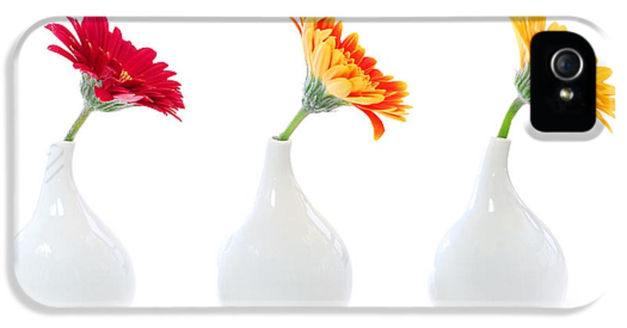 Vase IPhone 5 Case featuring the photograph Gerbera Flowers In Vases by Elena Elisseeva