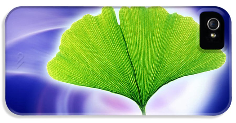 Ginkgo Biloba IPhone 5 Case featuring the photograph Ginkgo Leaf by Pasieka