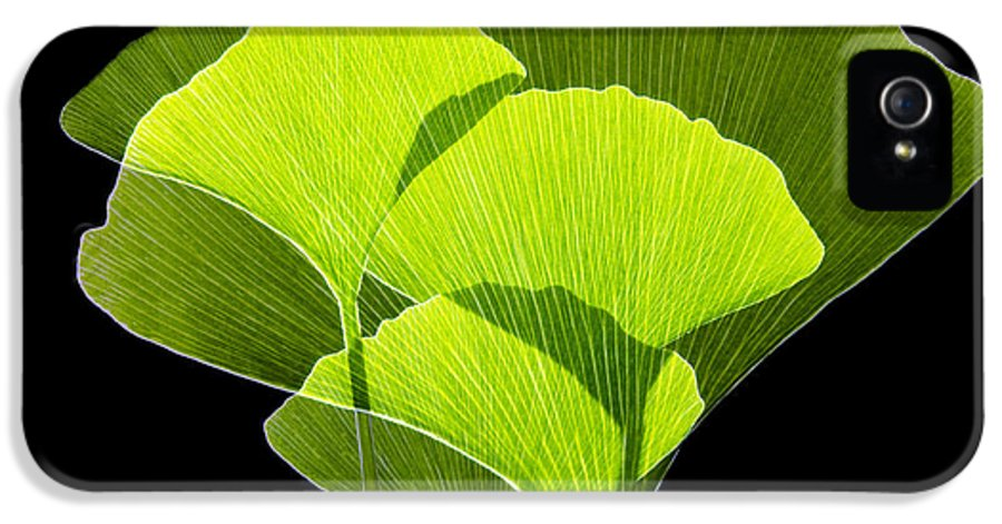 Ginkgo Biloba IPhone 5 Case featuring the photograph Ginkgo Leaves by Pasieka