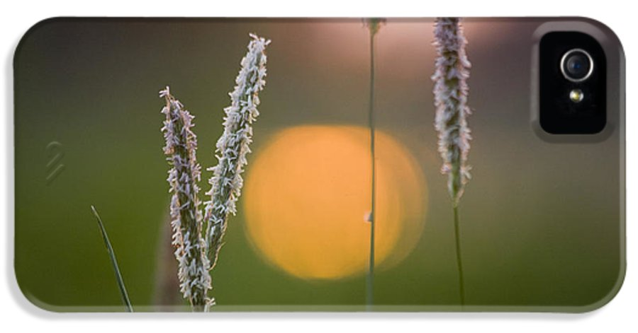 Heiko IPhone 5 Case featuring the photograph Grass Blooming by Heiko Koehrer-Wagner